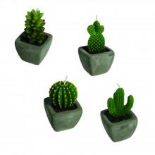 Kaktuslys