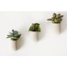 Magnetiske Planter 3-pakning