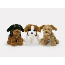 Teddy Dogs