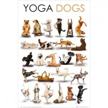 Yoga Hunde Plakat