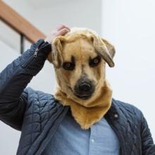 Maske Hund