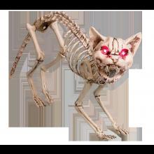 Skrikande katt Skelett