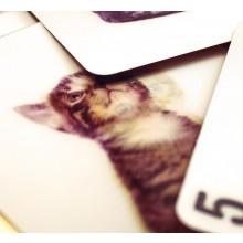 3D-Kortstokk Katter