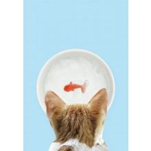 Katteskål Med Gullfisk