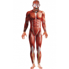 Anatomimann-kostyme