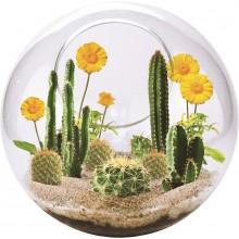 Mini Ørken Terrarium